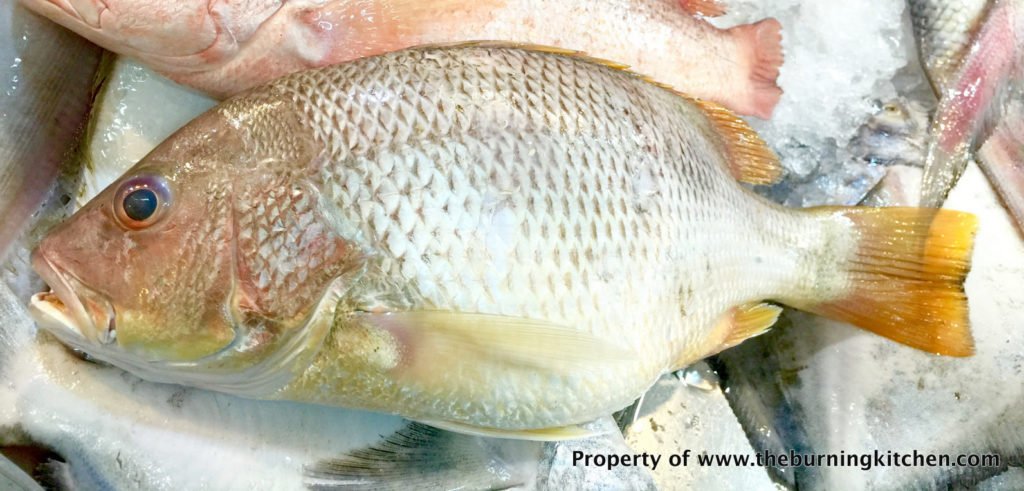 Foodie Local Fish Guide - Golden Snapper
