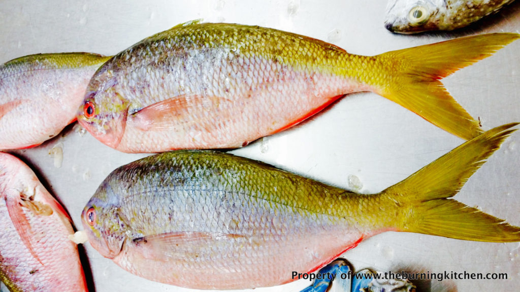 Foodie Local Fish Guide - Yellowtail Fusilier