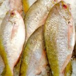 Local Fish Guide - Yellowtail Fusilier