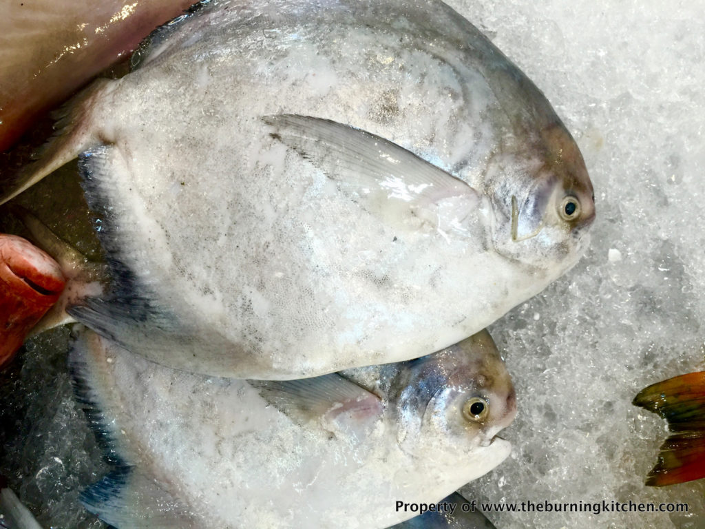 Foodie Local Fish Guide - Chinese_Silver_Pomfret