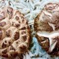 Braised Chinese Shitake Mushroom Recipe